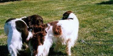 Απόφαση Δ. Σ. της Κ.Σ.Ε. για τη διαβούλευση του νομοσχεδίου για τα ζώα συντροφιάς