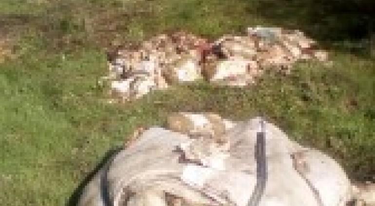 Παρέμβαση της ΚΟΜΑΘ σε παράνομη εναπόθεση υπολειμμάτων σφαγιασθέντων ζώων (προβάτων) σε δασική έκταση
