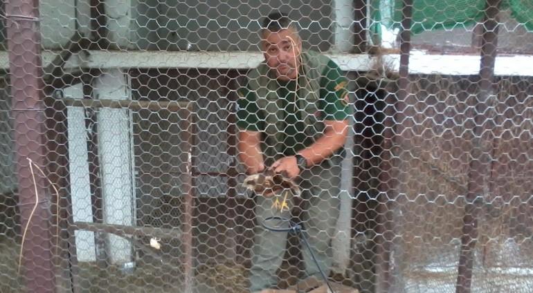 Διάσωση αρπακτικού πτηνού από την Ομοσπονδιακή Θηροφυλακή της ΚΟΜΑΘ