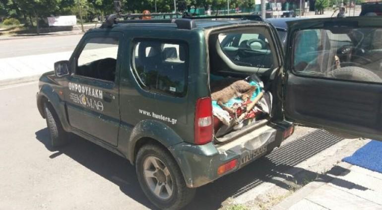 Τροχαίο με αγριόγιδο στην Εγνατία Οδό! Άμεση κινητοποίηση της ΚΟΜΑΘ