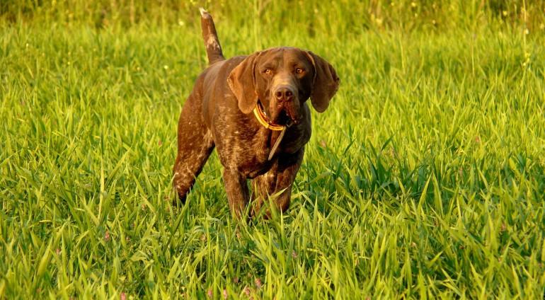 Σε διαβούλευση το νομοσχέδιο για τα ζώα συντροφιάς