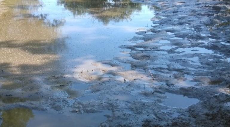 Έριξαν δηλητήρια σε μικρή λίμνη στη Νιγρίτα Σερρών. Παρέμβαση των κυνηγετικών οργανώσεων και του Δήμου για άμεση αποστράγγιση.