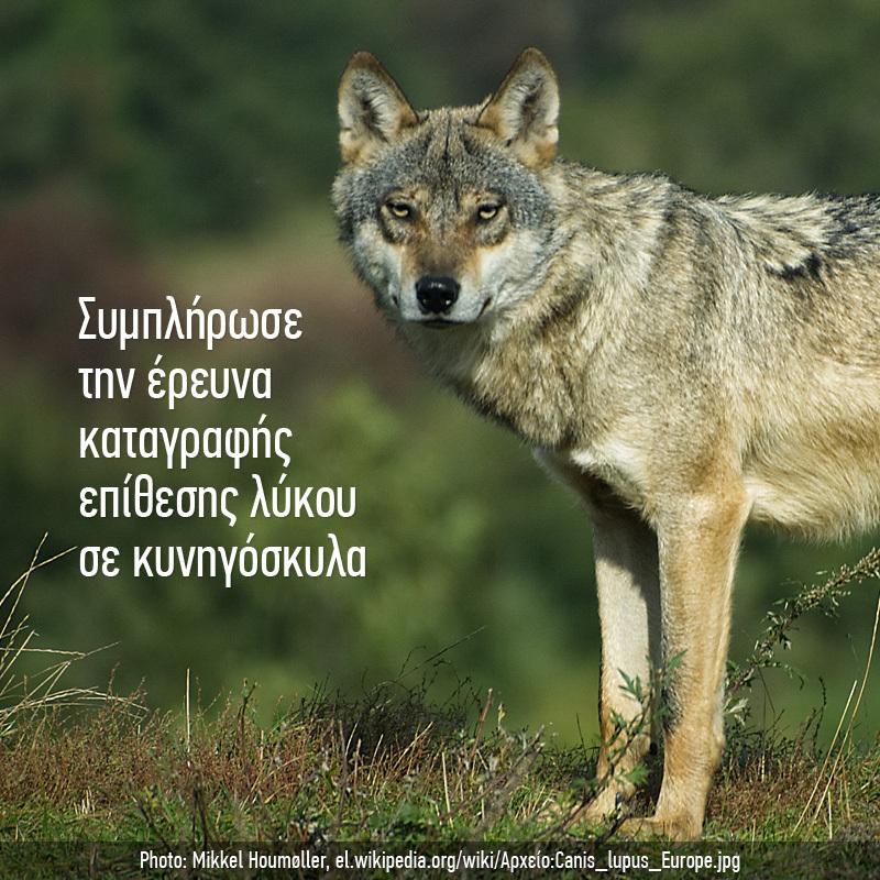 Καταγραφή επίθεσης από λύκο